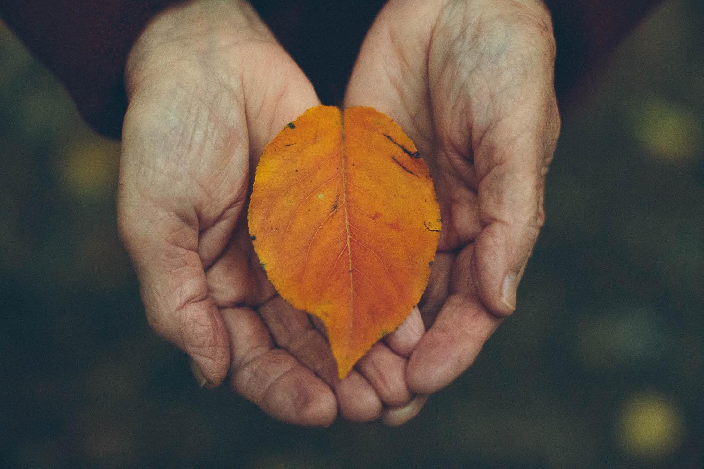 Older person's hands holding a fall orange leaf